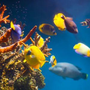 poissons dans le récif
